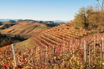 Langhe, colline e vigneti delle in autunno
