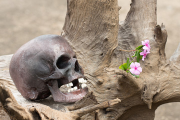 Still life, skull in the backyard and log in the park
