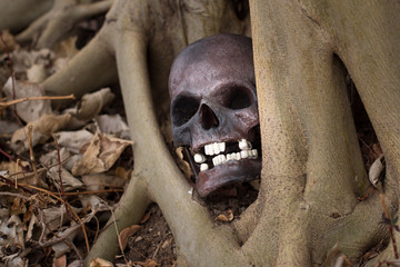 Still life photography, skull on dry leaf at bottom of big Bodhi
