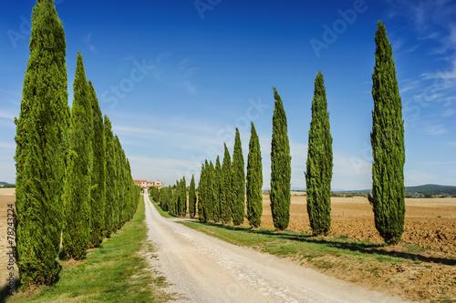 Tuscany road with cypress trees, Italy - 78243224