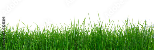 Green grass on white background - 78245204