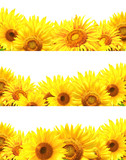 Set of borders with sunflowers