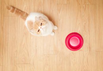 Cute cat beging food