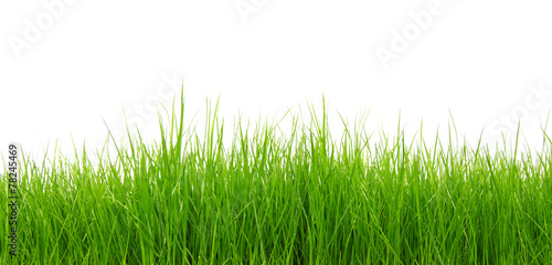 Green grass on white background - 78245469