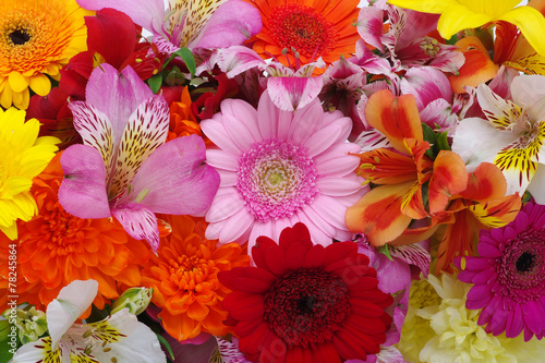 Foto op Aluminium Gerbera beautiful flowers