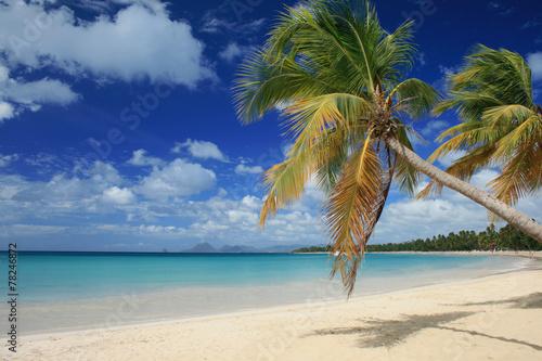 Plage des salines en Martinique - 78246872