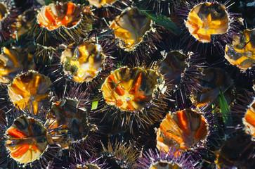 freshly cut sea urchins at the fish monger..Selective focus