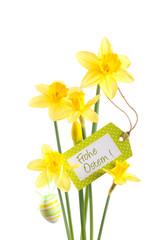 Osterglocken - Freisteller mit Text Frohe Ostern