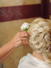 Rose in Bride's Hair