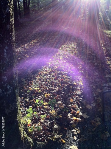 canvas print picture Sonniger Herbst