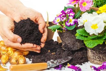 Pflanzen, Hände mit Blumenerde