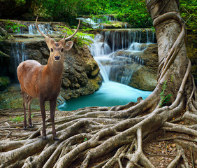sambar deer standing beside bayan tree root in front of lime sto