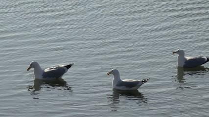 Nöwen schwimmen auf dem Wasser