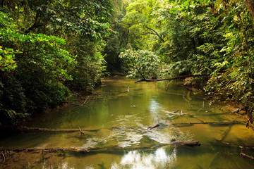 Small river in jungle