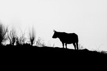 Silueta de vaca
