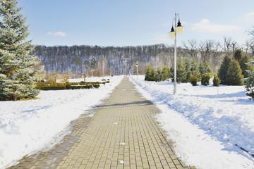 Красивая аллея в зимнем парке