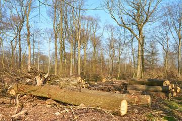 Beschädigter Wald