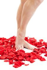 female beauty feet in scarlet rose petals