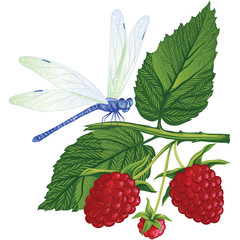 dragonfly sitting on the raspberries.