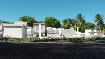 Iguanas in Key West Fl Grave Yard