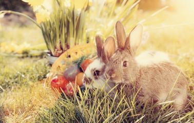 Osterhasen mit Ostereiern an Ostern