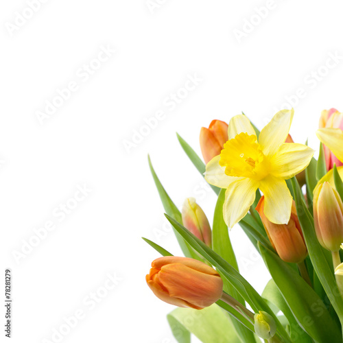 Fotobehang Narcis Blumen Freisteller - Osterglocken und Tulpen