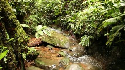 Stream running through humid rainforest, Ecuador