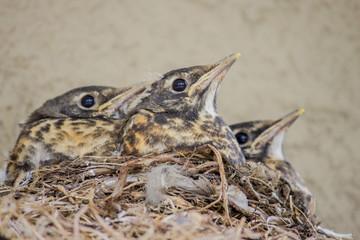 Calm birds