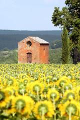 Toscana,campagna di san Galgano.