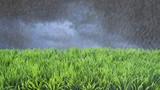 Spring Summer Lawncare Rain