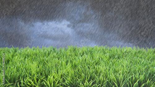 Fotobehang Luchtfoto Spring Summer Lawncare Rain