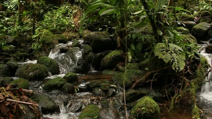 Stream running through humid rainforest, Ecuador