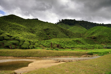 Green hills covered with tea bushes and small river in front of