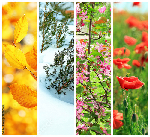 Foto op Canvas Madeliefjes Four seasons collage: winter, spring, summer, autumn