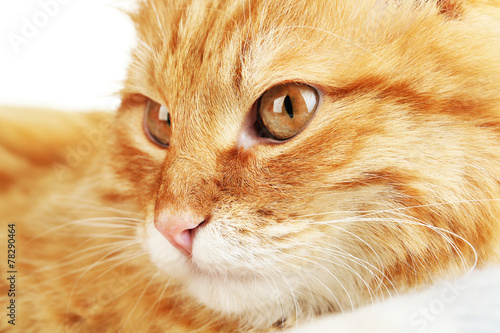 canvas print picture Red cat on warm plaid and light background