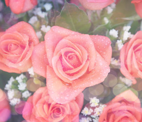 beautiful pink roses in a bouquet with water drops