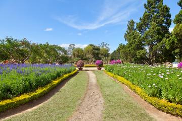 footpath in the lush spring garden