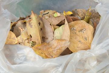 Bags of dry leaves