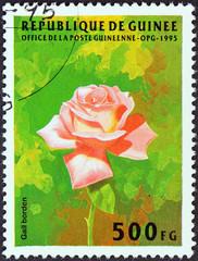 Rose, Gail Borden (Guinea 1995)