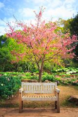 Wild Himalayan Cherry flower in garden