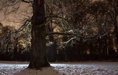 Baum im Winter bei Gegenlicht