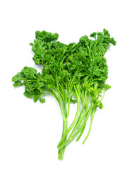 green curly parsley isolated on white background