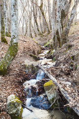 stream in mountain woods in spring