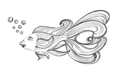 goldfish drawing on white