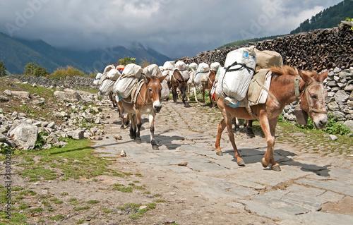 Foto op Aluminium Nepal Donkey caravan in Nepal - Annapurna trekking