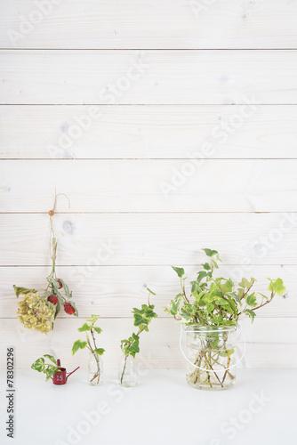 Foto op Plexiglas Hydrangea 白い壁 植物 飾り棚