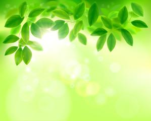 Leaves in sunlight. Vector illustration.