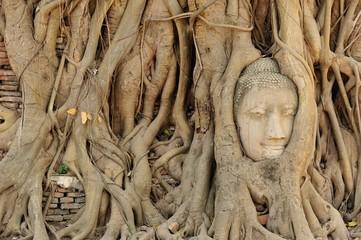 Buddha head in tree roots at ayutthaya ,Thailand.