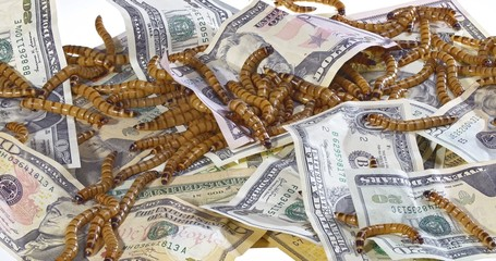 Big ugly worms crawling over dollars banknotes background, econo