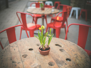 Lillies on a table in the street